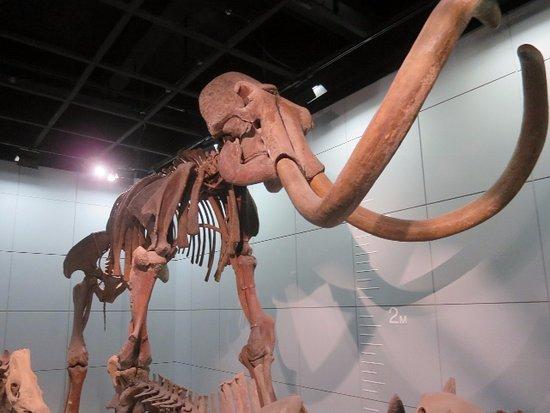 Zhejiang Natural Museum: 本物ではないですが…