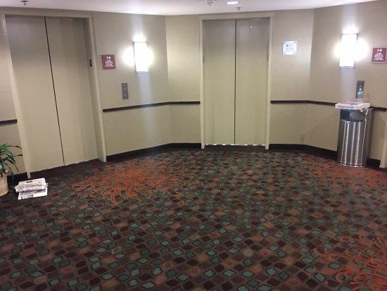 Hotels Near Busch Blvd Tampa Fl