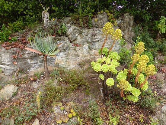 Rocaille de plantes grasses - Picture of Jardin Du Domaine D ...