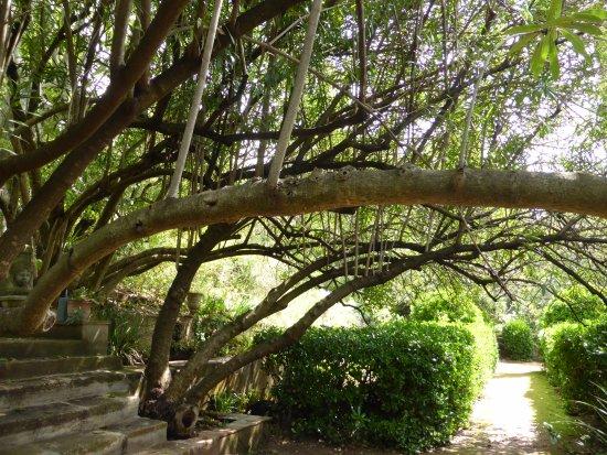 Jardin Du Domaine D'orvès: L'escalier menant à la bastide