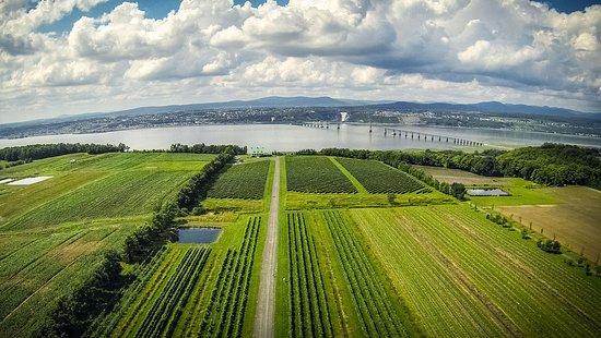 Sainte-Petronille, แคนาดา: Vignoble Ste-Pétronille, ïle d'Orléans