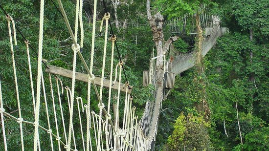 Tema, Ghana: The famous Kakum National park- Canopy Walkwway is the leading destination for Birdwatching in G
