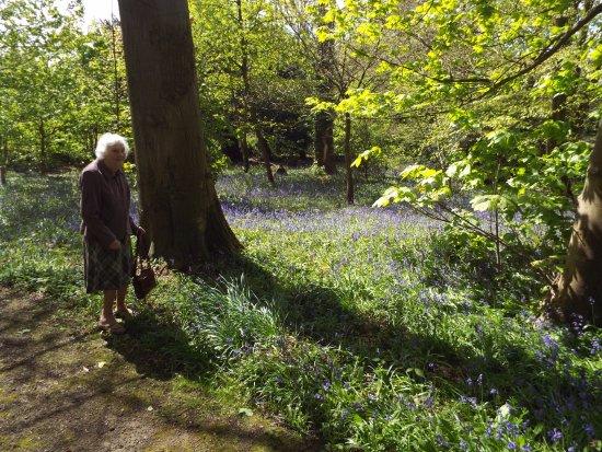 Great Barrow, UK: Bluebell Wood