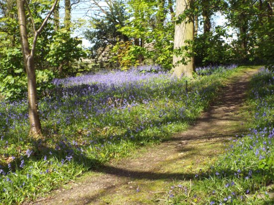 Great Barrow, UK: 5 minutes walk from the Cafe