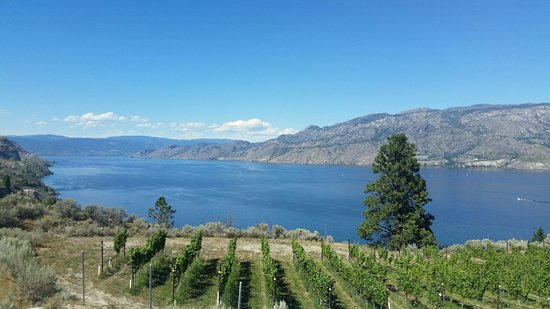 Osoyoos, Canada: Stunning Vineyard views