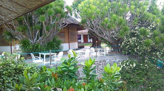 Pool - Picture of Quo Vadis Dive Resort, Cebu Island - Tripadvisor