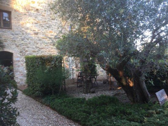 Tenuta Sant'Ilario: photo7.jpg