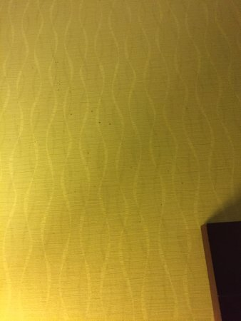 Best Western Mill River Manor: Stained walls