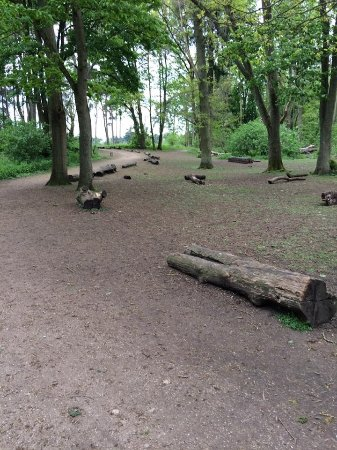Coombe Abbey Country Park: Path set by logs