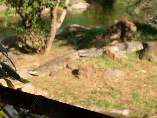 Johannesburg Zoo: IMG-20170430-WA0027_large.jpg