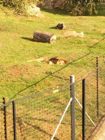 Johannesburg Zoo: IMG-20170430-WA0025_large.jpg