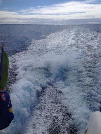 Futurismo Azores Adventures : photo0.jpg