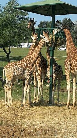 Safari Park : Screenshot_20170430-180939_large.jpg