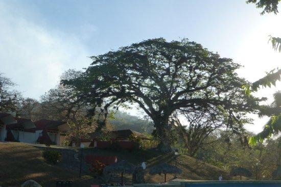Villa Horizontes Soroa: awesome tree on the property