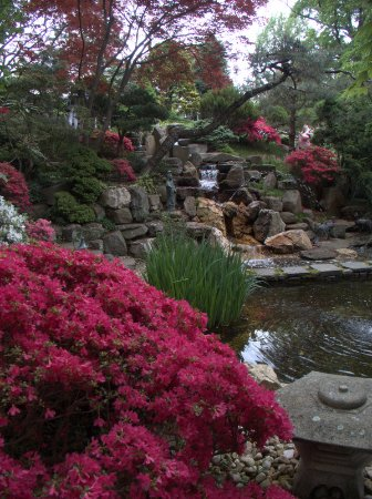 Hillwood Museum & Gardens: The Japanese garden at Hillwood