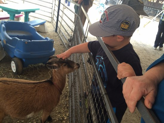 Essex, CT: Petting zoo
