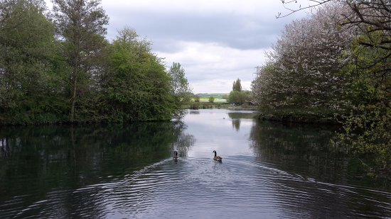 Pewsey, UK: Manningford Trout Fishery