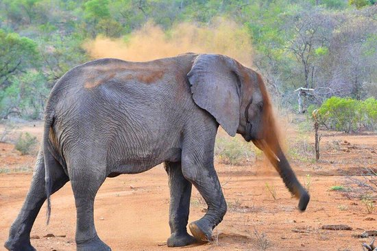 Частный заповедник Тимбавати, Южная Африка: And so our adventure begins! October 2016