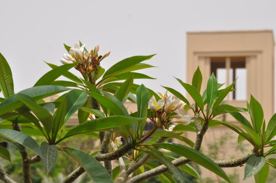 Zdjęcie Holiday Inn Resort Dead Sea