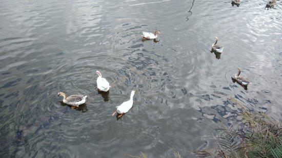 Parque do Lago Francisco Rizzo: Lago de 54000m² com tartarugas, peixes, muitas aves