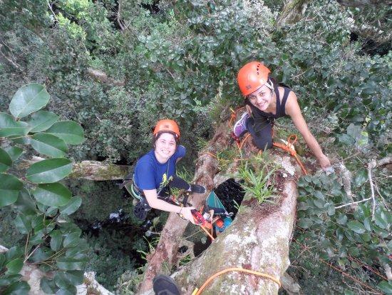Amazon Tree Climbing: No topo...ou quase