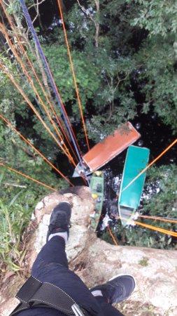 Amazon Tree Climbing: Tenha a várzea aos seus pés