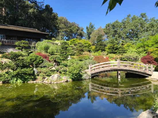 Best Of The Japanese Gardens In Sf Bay Area Review Of Hakone