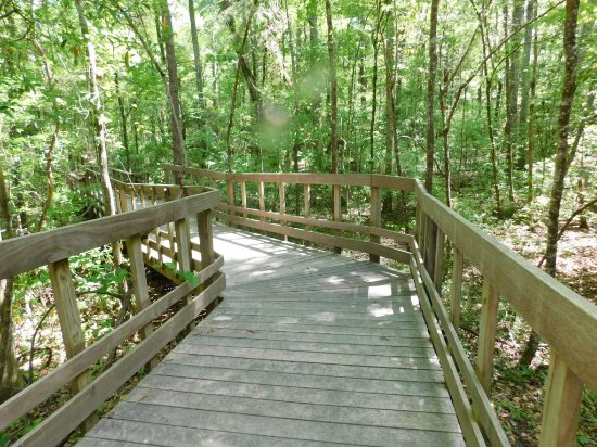 Harleyville, Carolina del Sur: Wide Elevated Boardwalk