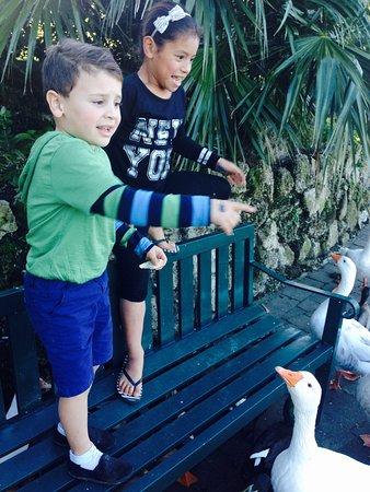 Wanganui, Nouvelle-Zélande : photo6.jpg
