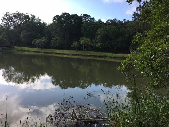 ริดจ์แลนด์, เซาท์แคโรไลนา: View of pond from back yard