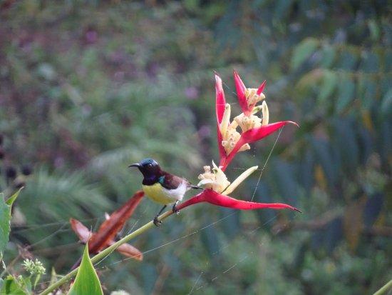 Southern Province, Sri Lanka: Purple Sunbird.