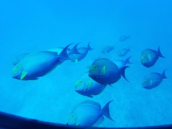 Fish picture of atlantis submarines waikiki honolulu for Plenty of fish oahu