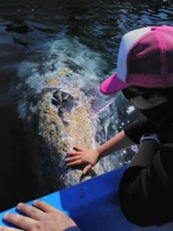 Puerto San Carlos, Mexico: baby whale