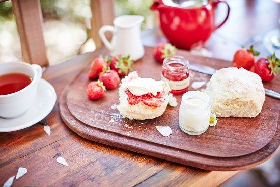 Main Ridge, Australia: Devonshire Tea