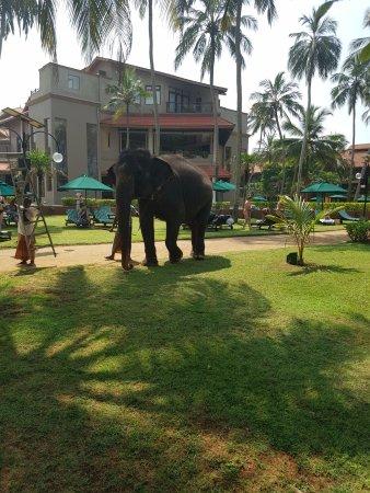 Royal Palms Beach Hotel 111 1 2 6 Updated 2018 Prices Reviews Sri Lanka Kalutara Tripadvisor