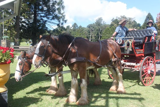 Dalby, Australia: back to Bunya Mountain safely