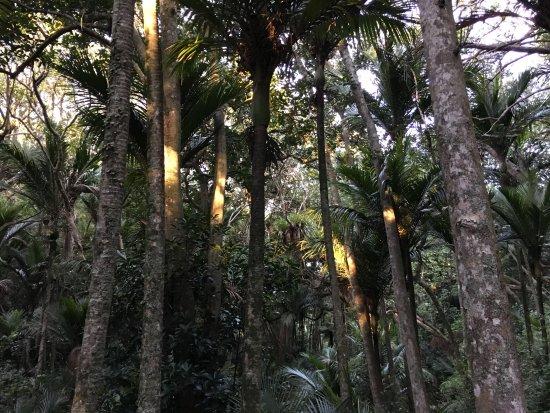 Habitat Tours : Indigenous Rainforst, Tawharanui, north of Auckland