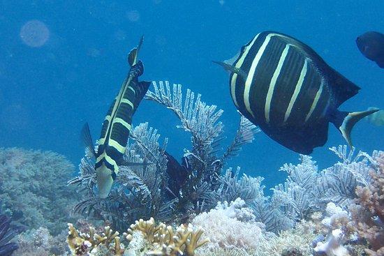 Action Divers Photo