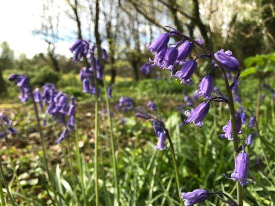 Blackawton, UK: photo2.jpg