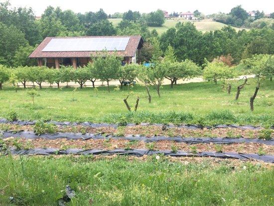Cascina Papa Mora: Facciata e coltivazione di fragole