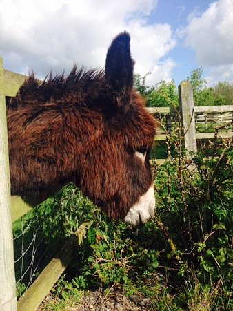 Woodlands B&B: One of Sean's lovely donkeys (who liked the taste of my coat!)