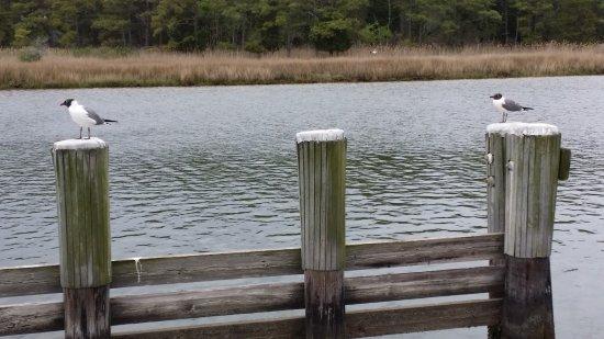 Janes Island State Park: good fishing spot