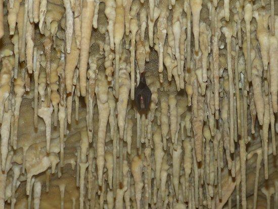 Payrignac, Fransa: chauve souris au milieu des concrétions...