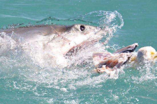 White Shark Ventures: Eye of the shark