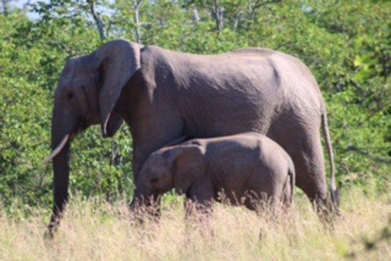 Foto de Timbavati Private Nature Reserve