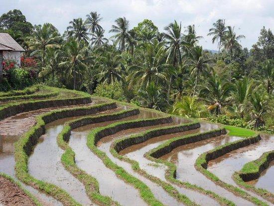 Bali Side Tour