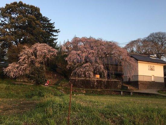 Furusho Residence