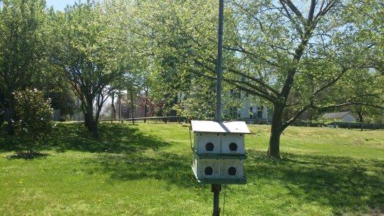 Manokin River Park: Bird 'apartments'.