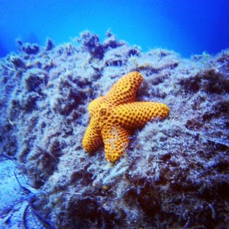 Bucket List Diver: Striking Star, Ammo jetty, April 2017