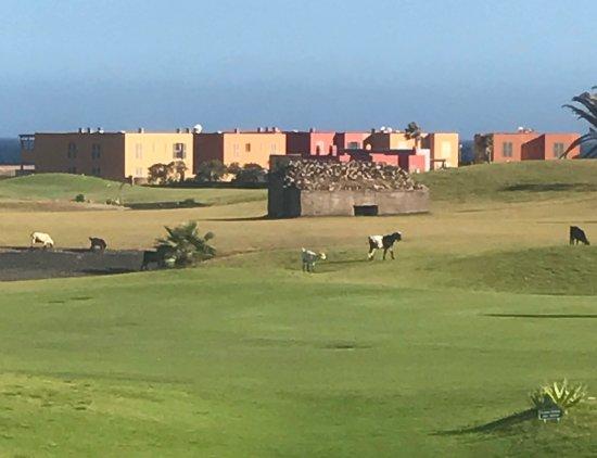 Fuerteventura Golf Club: photo2.jpg